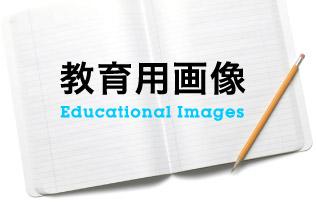 教育用画像・動画
